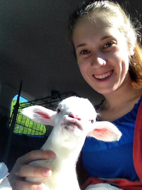 frodo and a lamb