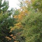 Foliage Begins near Bathhouse